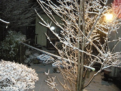 2010201_008